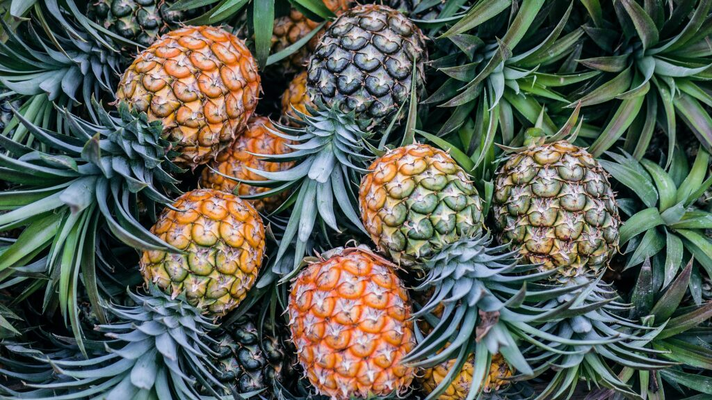 Does pineapple help you lose weight