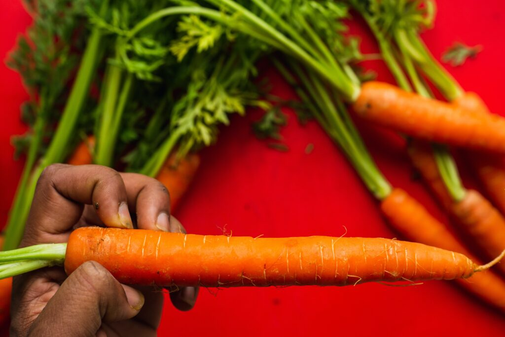 Person holding carrot