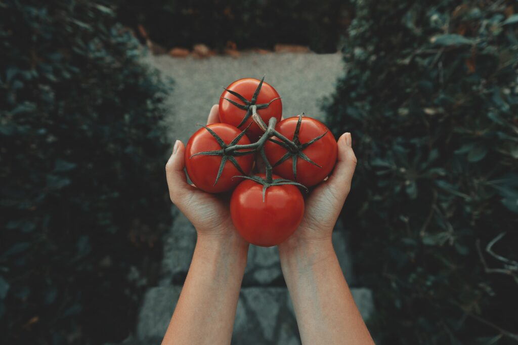 person holding tomatoes in hands