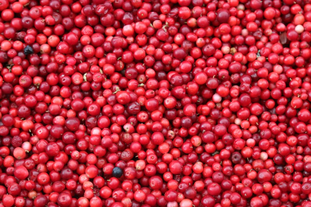 Cranberries before being dried