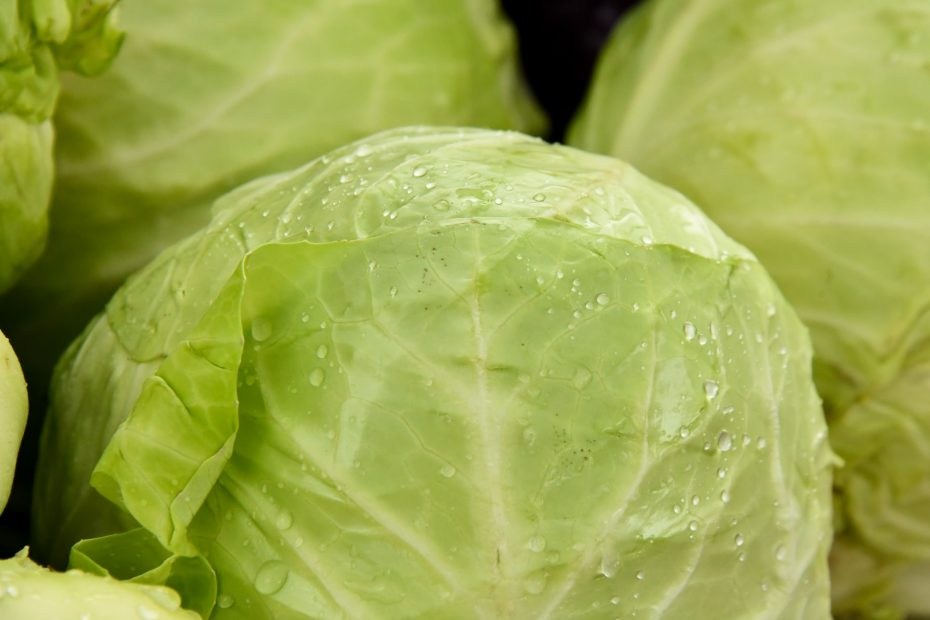 Is Cabbage Keto-Friendly (& Substitutes)